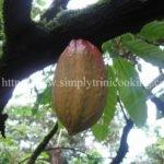 A Cocoa Story II – How Cocoa is Made Trini Style